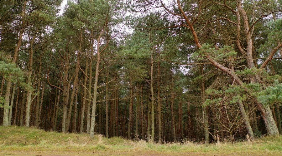 Belhaven Bay woodland